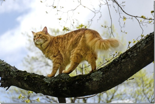 felinos blogdeimagenes (7)