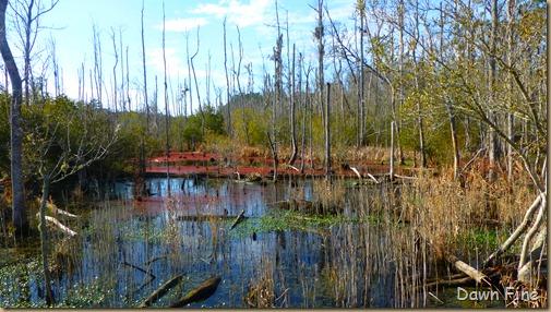 Goose Creek State Park _014