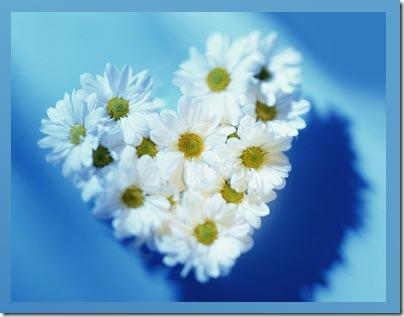 flor día del amor (34)