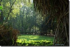 naturan_beauty_at_indroda_nature_park