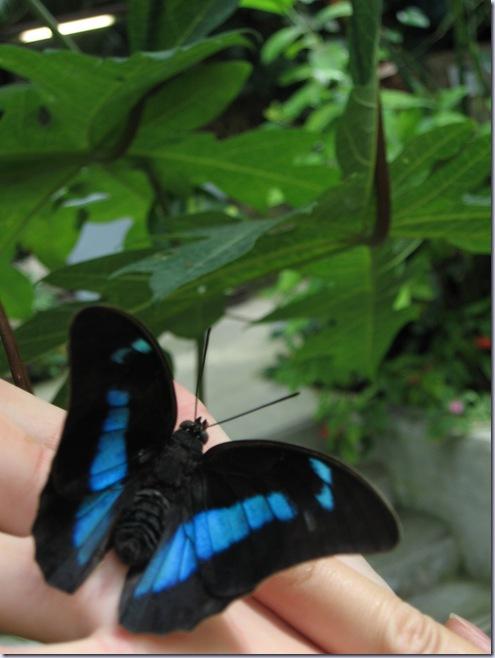 Farfalle 079