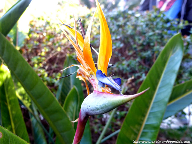flor-ave-del-paraiso.JPG