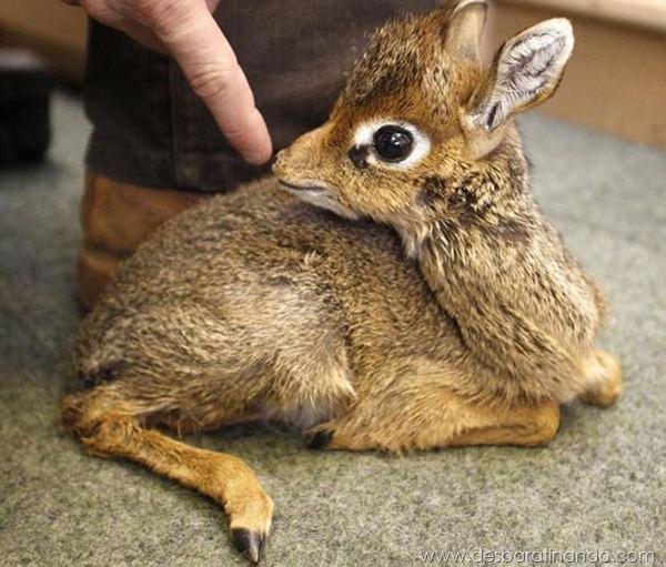filhotes-de-animais-fotos-cute-cuti-desbaratinando (18)