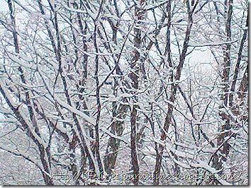 2012-02-19_17-06-33_342