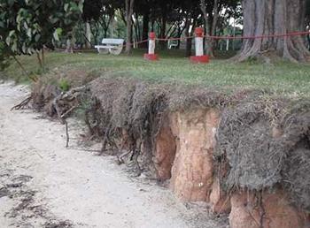 Coastal erosion at Singapore's East Coast Park, May 2008. wildshores.blogspot.com