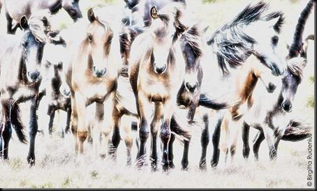 pm_20110625_horses1
