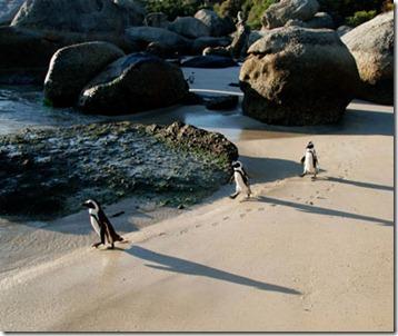 201202-w-unusual-beaches-boulder-beach