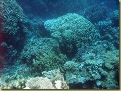 Coral Garden-2