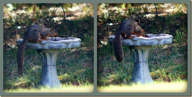 Bird Bath Squirrel