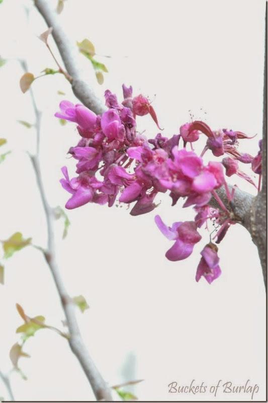 Spring garden 3