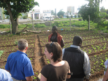 'Visiting an Urban Farm with Alliance for a Green Revolution in Africa (AGRA), in Accra.' Photo by Sandra Vu