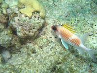 Snorkeling Key West - National Marine Sanctuary