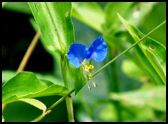 9e - wildflowers