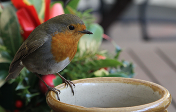 Christmas Robin hires