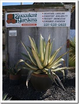 111001_succulent_gardens_19