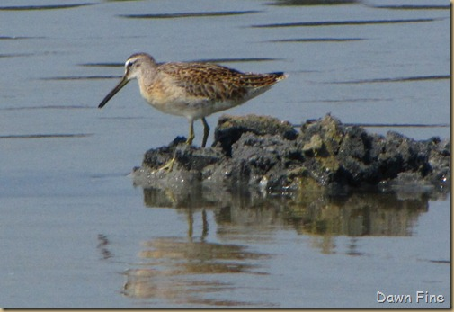 Birding Clamming_023