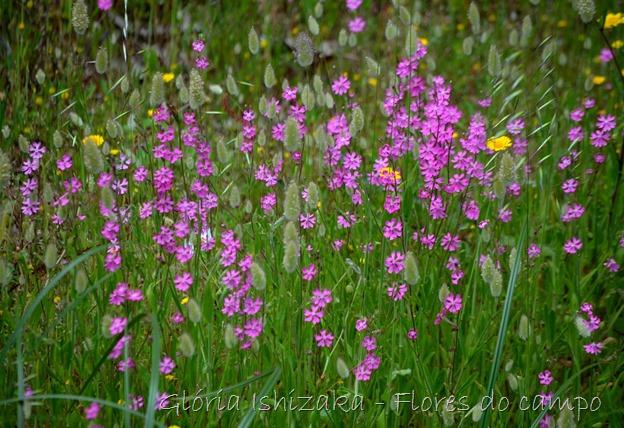 1 Glória Ishizaka - click -  flor 1