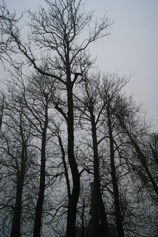 [2011-11-28-Wildwood-0103.jpg]