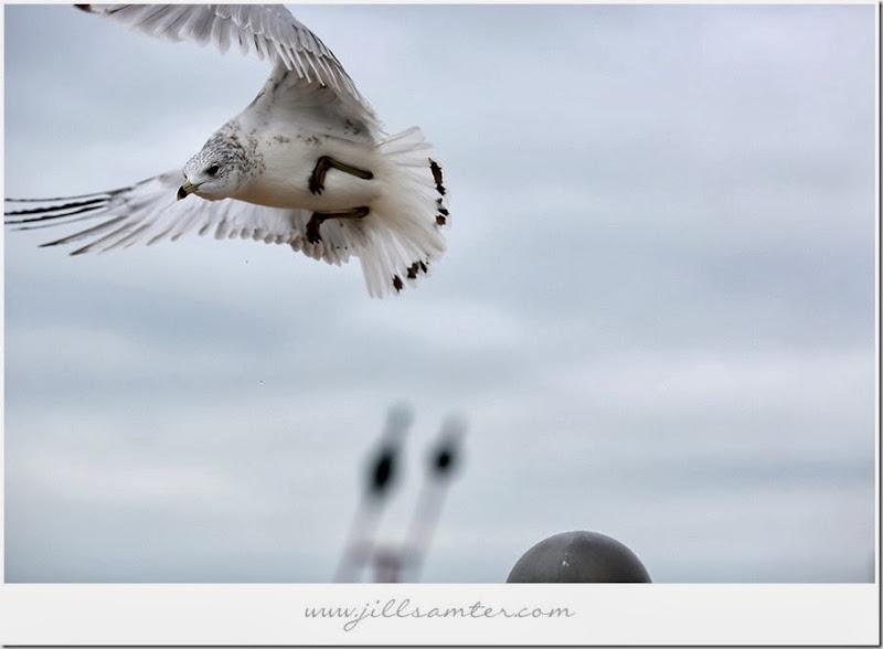 birdstand-fly