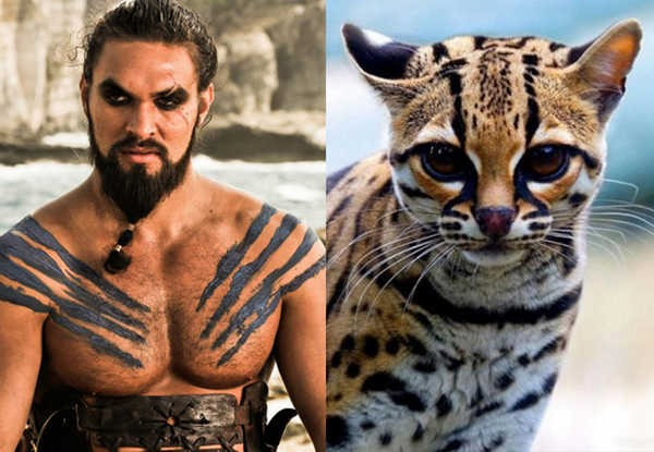 E se os personagens de Game of Thrones fossem gatos 17