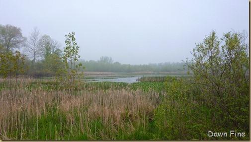 Sheldons Marsh Old Womans Creek_015