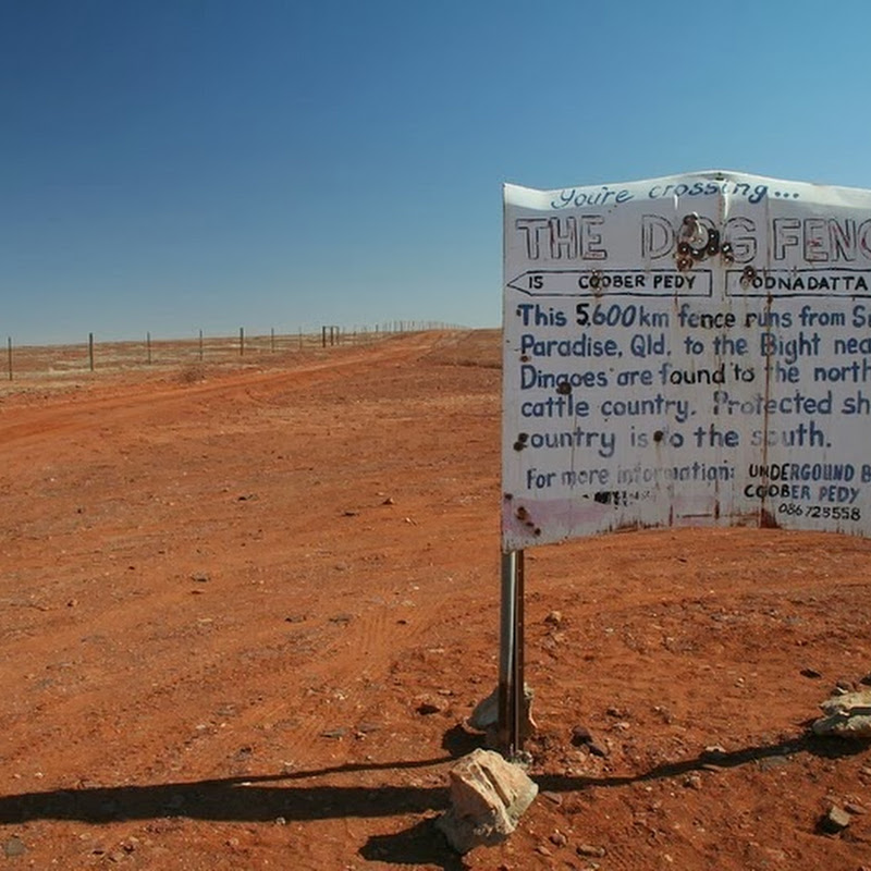 Dingo Fence: Australia's 5,600Km Dog Fence