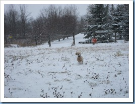 20111123_dogs_001