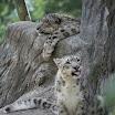 zoo_kolmarden_8948.jpg