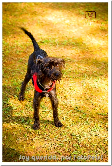 Joy by www.fotopets.com.br