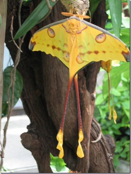Farfalle 073