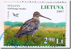 great snipe bird on stamps