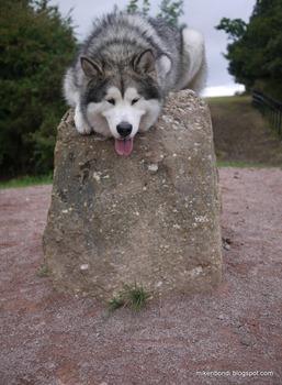 Munson on Offa's Dyke starting stone (1)