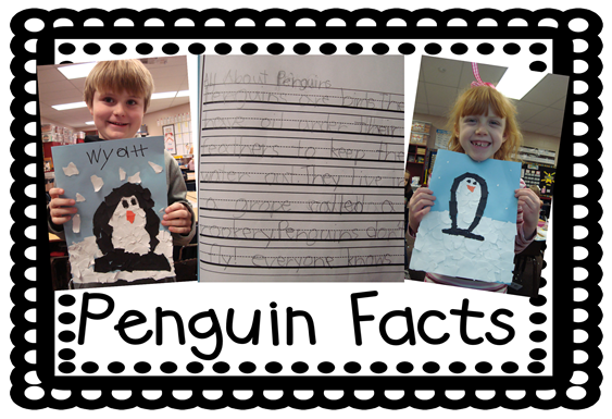 penguin facts2
