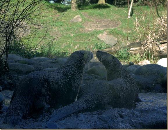 Woodland Park Zoo 6