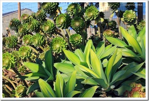 130927_SucculentGardens_128_thumb