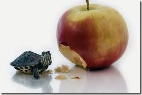 humor tortugas (43)