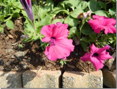 Flowers summer2011 018