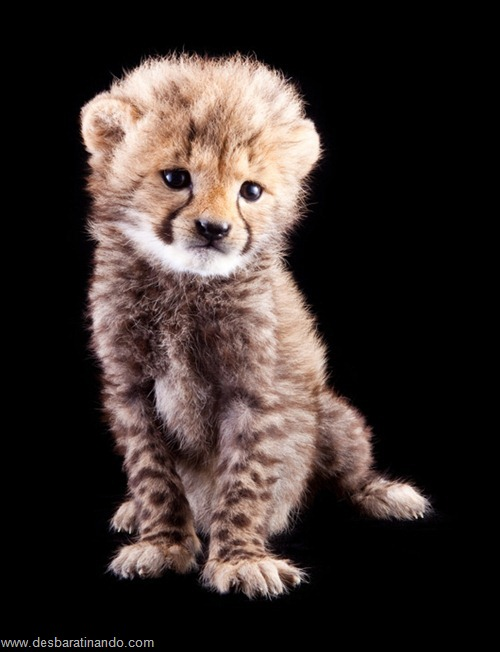 filhotes recem nascidos zoo zoologico desbaratinando animais lindos fofos  (21)