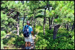 04d - North Ridge Trail - through the pines