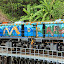 The Locomotives of the Kuranda Scenic Railway Are Painted In A Traditional Tjupakai Style - Oak Beach, Australia