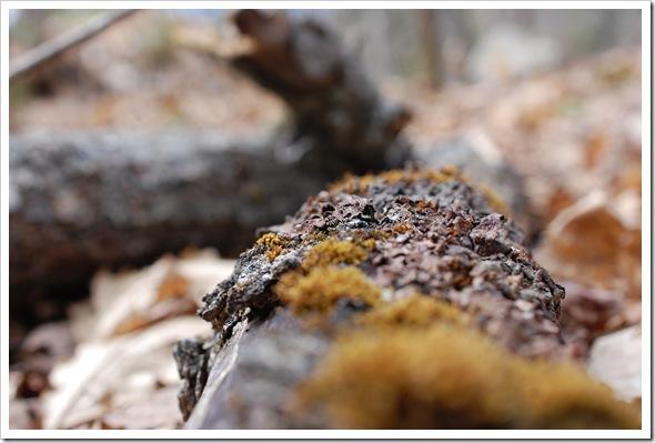 Lichenscapes (2)
