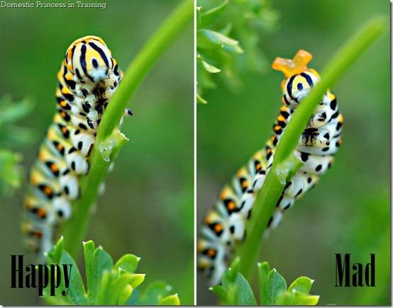 caterpillarBB