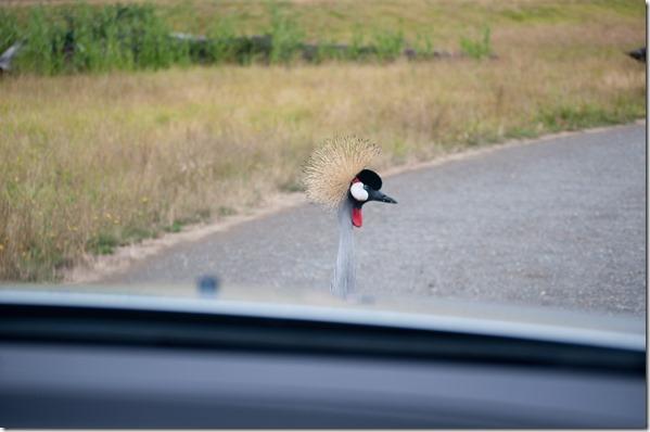 Wildlife Safari - Winston, Oregon
