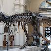 Sue, Tyrannosaurus Rex