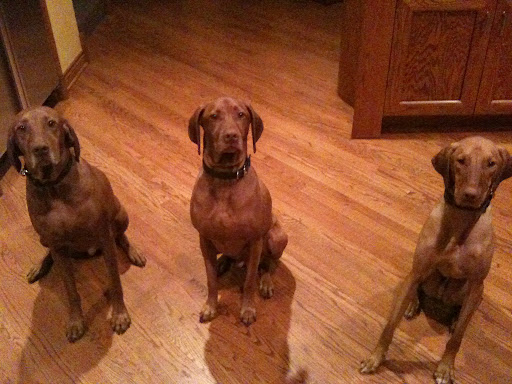 Drake, Diesel, and Duke hanging out at home.