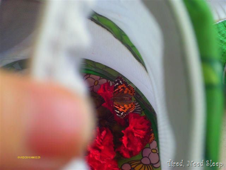 butterfly drinking sugar water on the carnations