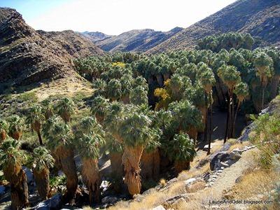 Trail down to Palm Canyon