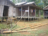 Kayu Manis (cinnamon) in Kadayang village - the starting point for Gunung Besar (Daniel Quinn, October 2011)