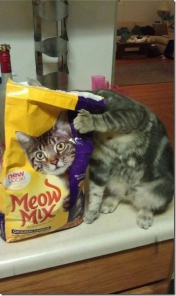 cats-timed-perfectly-6