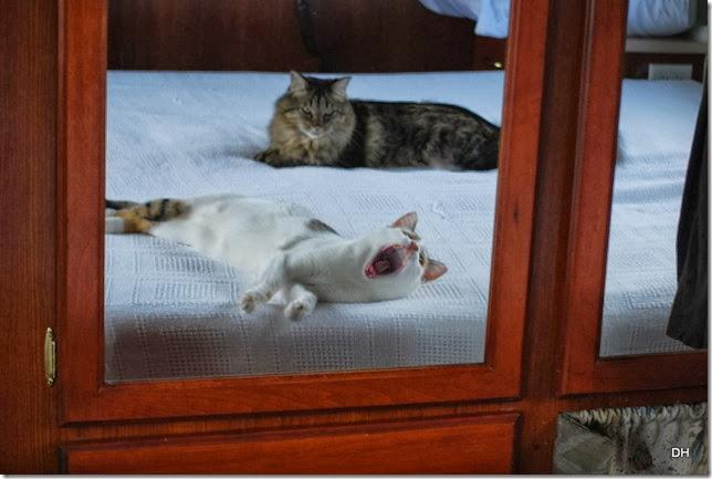 10-14-13 Osceola Cats (4)